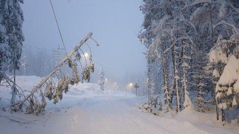 Flere trær har knekt og er på vei til å falle. Derfor kommer Skiforeningen nå med en advarsel.