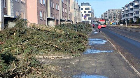 BYHOGST: Slik så det ut i Langbølgen på Lambertseter i Oslo etter at de store trærne i gata i forrige uke ble felt for å gi plass til nye sykkelveier. Det har ført til mange reaksjoner, men ikke alle er imot prosjektet.