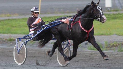 Stortalentet Jerven Junior blir vår soleklare V65-banker på Leangen i kveld sammen med Tor Wollebæk. Foto: Anders Kongsrud/www.hesteguiden.com.