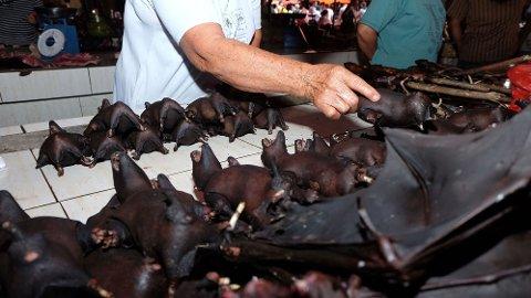 KILDE: Man antar at koronaviruset kom fra flaggermusene. Her fra Tomohon Extreme Meat market på Sulawesi-øyene i Indonesia.