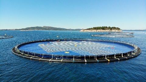 FLYTENDE: Solcellepanelene flyter på vanntett, elastisk membran, og teknologien har blitt testet og vist fram i Filippinene, Singapore og Norge de siste årene.