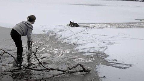 BRUKTE LASSO: Kristin Johnsen måtte bruke lasso for å få reddet inn et rådyr som hadde gått gjennom isen.