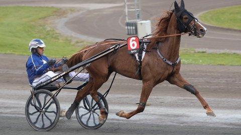 Formsterke R.M.G. Lady in Red er en av flere sterke favoritter forJomar Blekkan i kveldens internasjonale V65-omgang på Leangen. Foto: Anders Kongsrud/www.hesteguiden.com.