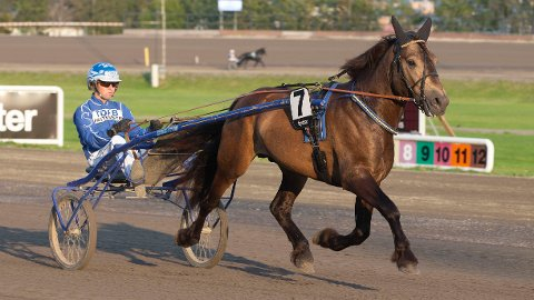 Rikard N. Skoglund er aktuell i torsdagens V64-omgang. Foto: Anders Kongsrud/www.hesteguiden.com.