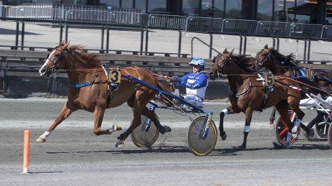 Force de Flandre og kusk Vidar Hop blir den ene av våre to bankere i kveldens V86-omgang på Bjerke. Foto: Anders Kongsrud/www.hesteguiden.com.