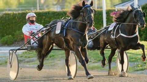 Bekke Stjernen (her med sin faste kusk Thomas Mjøen i et seiersløp på Leangen) gjør en spennende start i V4-2 i Østersund i dag. Foto: Ned Alley: Hesteguiden.com.