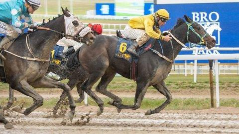 Dust Devil vant V4-3 forrige onsdag og var blant hestene som sørget for kjempeutbetaling i V4-spillet da. Det er gode muligheter for Dust Devil også i V4-2 i dag. Foto: Svensk galopp