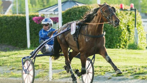 Bijou og Jomar Blekkan blir vår V65-banker på Leangen i kveld. Foto: Ned Alley: Hesteguiden.com.