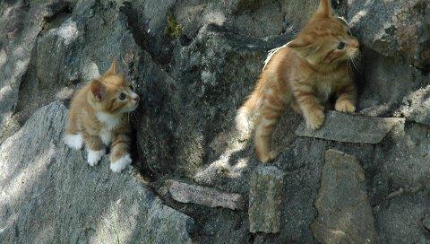 FORLATT: Dyrebeskyttelsen melder at 6 600 katter ble forlatt av eierne sine i løpet av 2017. Foto: Dyrebeskyttelsen