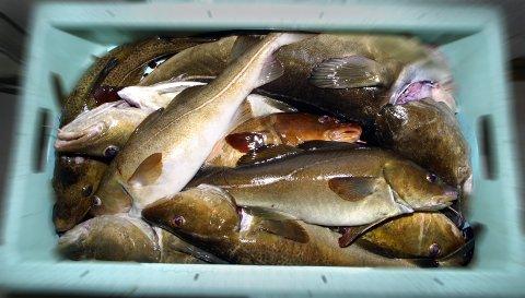 Fosfatfisk fra Kina er nå den store snakkisen rundt middagsbordene i Norge. Foto: NTB scanpix