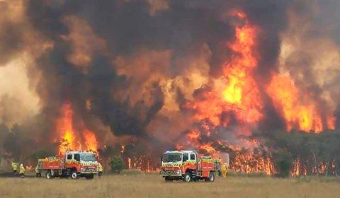 De voldsomme skogbrannene i Australia kan føre til varige skader på dyrelivet. Opp mot 100 arter er truet av full utryddelse, frykter forskere. Foto: AP / NTB scanpix