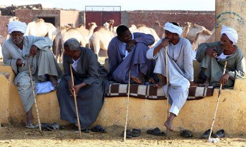 EGYPT: Menn sitter ved et kamelmarked i Kario. For kvinner er det vanskelig å skaffe seg arbeid. Illustrasjonbilde