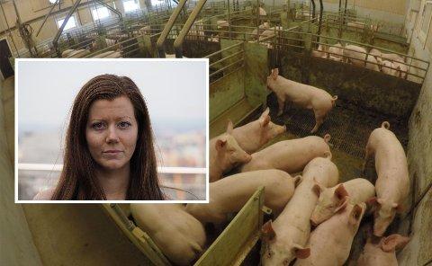 FILMET MED SKJULT KAMERA: Deler av dokumentaren «Griseindustriens hemmeligheter» er filmet med skjult kamera, mens Norun Haugen gikk undercover som fjøshjelp. Foto: Norunhaugen.no