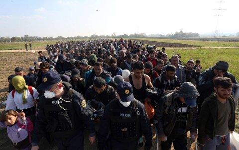 KOMMER OVER GRENSEN: Flyktninger, som har tilbrakt natta utendørs, blir ført mot en flyktningeleir av slovensk politi og soldater ved den kroatisk-slovenske grensen mandag.