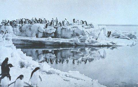 SØTE, SMÅ OG PERVERSE: Adeliepingvinene hekker i enorme kolonier på opp mot 250.000 par på isfri steingrunn langs kysten. Det går for seg på uvanlig vis ... Her er en solid flokk fotografert på Kapp Adare avpolarutforskeren George Murray Levick på begynnelsen av 1900-tallet.