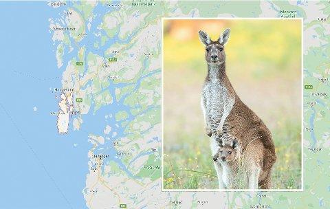 TRØBBEL: En kenguru på rømmen har blitt et problem for Storesund barnehage på Torvastad i Karmøy. Uteområdet må ryddes for kenguruavføring før barna kan bruke det. Foto: Google Maps / Getty Images