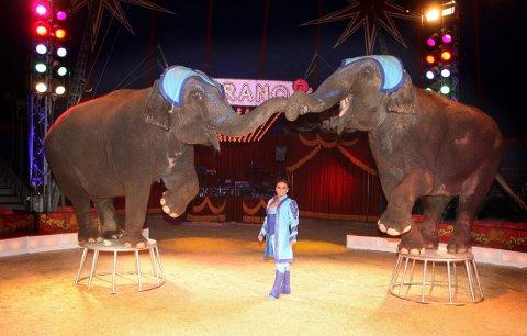I MANESJEN: Her er de to elefantene til Cirkus Merano i aksjon, sammen med Adriana Folco Althoff.