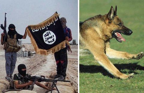 En tjenestehund av rasen schäfer får æren for å ha reddet en gruppe britiske soldater fra et IS-angrep. Bildet er en illustrasjon.