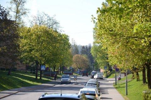 BEVARES: Disse trærne i Langbølgen på Lambertseter i Oslo skulle fjernes for å lage sykkelvei. Nå blir de bevart og naboene jubler.