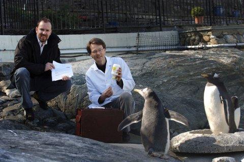 BLIR GODT TATT VARE PÅ: Direktør på Akvariet i Bergen Kees Ekeli passer godt på pingvinene. Dette bildet ble tatt da pingvinene ble vaksinert av veterinær Nils Reither i 2006.