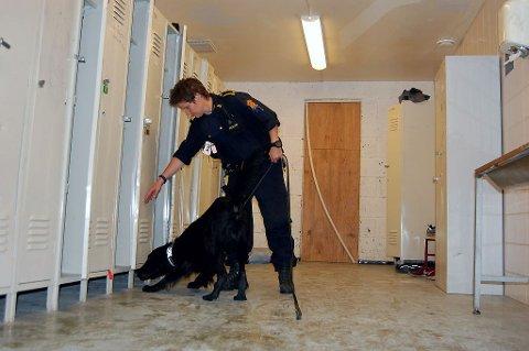 Stovnerpolitiet har økt innsatsen mot narkotika på skolen. Her søker Nando etter narkotika i skap, med god hjelp fra hundefører Torill Borøchstein.