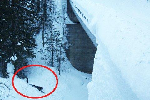 Elgen ble jaget eller presset foran en bil i over to kilometer før den endte sine dager her.