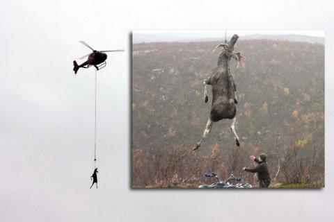 ELGLANDING: På få minutter ble elgen fraktet tilbake til leiren.