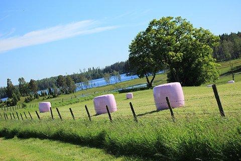 ROSA HØYBALLER: Du kjenner kanskje til rosa sløyfe aksjonen til støtte for Kreftforeningen. I sommer kommer de rosa høyballene.