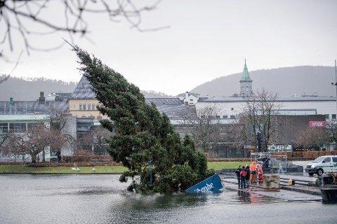 Juletreet i Smålungeren har kantret lørdag morgen, og det jobbes på spreng for å få det på plass til Lysfesten klokken 16.