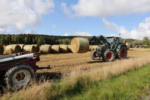 Landbruksarealet i Norge er på fattige tre prosent.