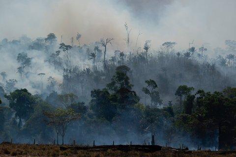 BRENNER: Regnskogen brenner i Amazonas. Stadig flere branner er registrert de siste dagene. Foto: Leo Correa / AP / NTB scanpix
