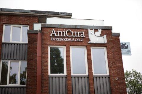SLO ALARM: Veterinærkjeden Anicura var først ute med å slå alarm om sykdomsutbruddet. Torsdag meldte de om minst 20 døde hunder som de knytter til det pågående utbruddet.