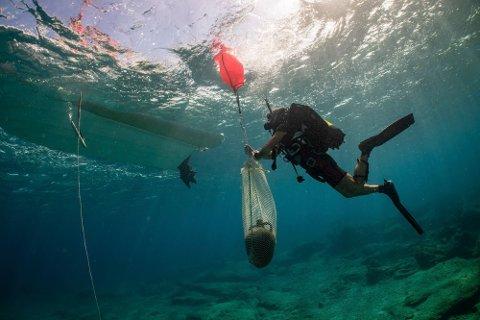 Arkeologer samler inn gjenstander dra et skipsvrak utenfor øya Kasos i Egeerhavet. Foto: Det greske kulturdepartementet via AP / NTB scanpix