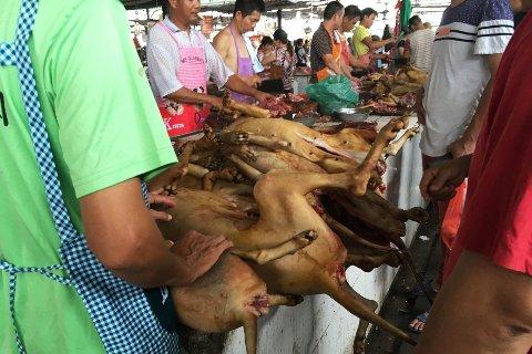 Hundekjørt-festivalen i Yulin er en stor årlig begivenhet, og har ikke blitt stoppet av at kinesiske myndigheter har endret klassifiseringen av hunder.