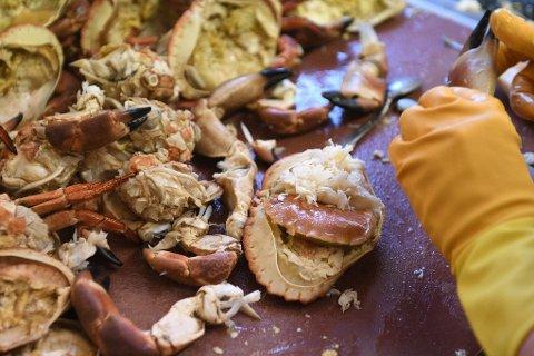 AVRIVES: Folk som river klørne av krabbene er ren tortur, sier Havforskningsinstituttets forsker. Illustrasjonsfoto.