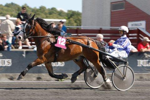 Harry Søfteland er aktuell i kveldens V65-omgang fra Bergen. Foto: Anders Kongsrud/www.hesteguiden.com.
