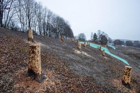 IKKE KUNST: De barkeløse stubbene ved Tøyenbadet fjernes ikke. Dette er årsaken.