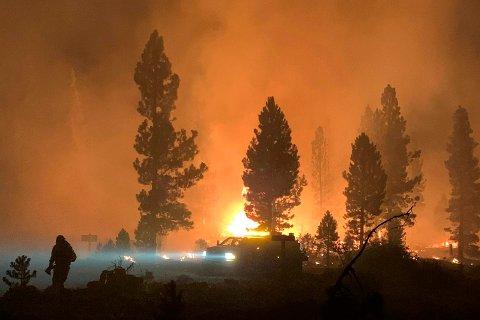 Et området rammet av Bootleg-brannen sør i Oregon i midten av juli. Brannen er den største av dem som herjer i USA, og den har blant annet ødelagt skogsområder kjøpt som klimakompensasjon av Microsoft og oljegiganten BP. Foto: Bootleg Fire Incident Command / AP / NTB