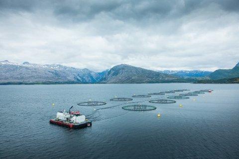 Lakseselskapet Nova Sea har oppdrettsproduksjon langs hele helgelandskysten.