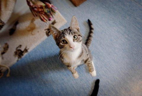 DYREVELFERD: Dyrenes velferd prioriteres med to millioner kroner i revidert nasjonalbudsjett i form av penger til dyrepoliti i Østfold. Bildet er tatt hos Dyrebeskyttelsen i Mosseveien i Oslo.
