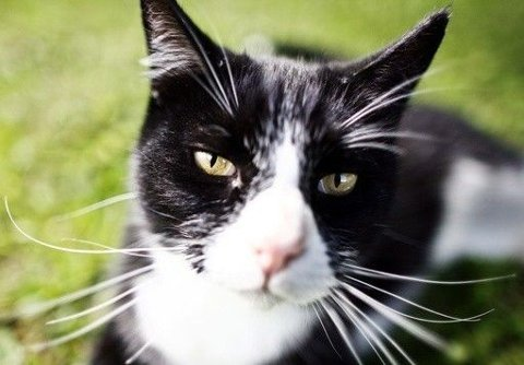 KAN TA TID Å OPPFATTE AT KATTEN ER SYK: Når katter er smittet med FIV - katteaids - kan det gå lang tid fra smitte til sykdomsutbrudd: Illustrasjonsfoto.