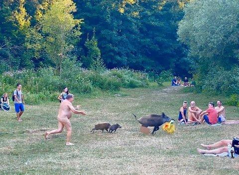 Det var mange som fikk seg en god latter da de ble vitne til en nudist som løp etter villsvin i Berlin denne uken. Villsvinet hadde stukket av med laptopen til mannen.