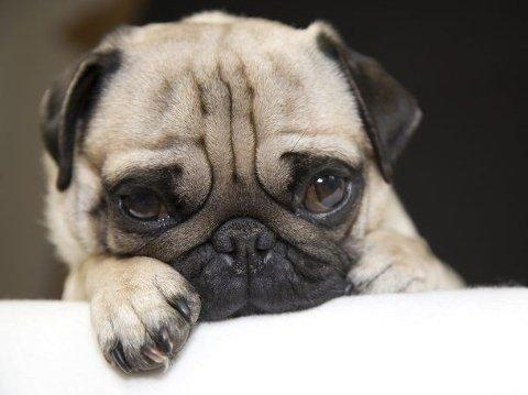 Hunden din blir påvirket av ditt stress, i mye større grad enn du tror.