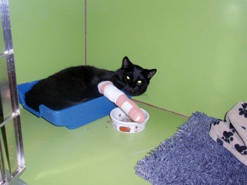 PÅ BEDRINGENS VEI: Grefsen-katten fikk raskt veterinærhjelp etter å ha blitt funnet av en hjelpsom mor og datter.