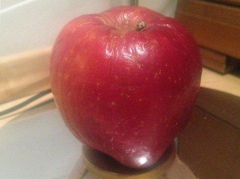 Slik ser eplet ut etter 15 (!) måneder i kjøleskapet. Eplet har litt rynker og kjennes noe mykt, men bærer ellers lite preg av alderdommen.