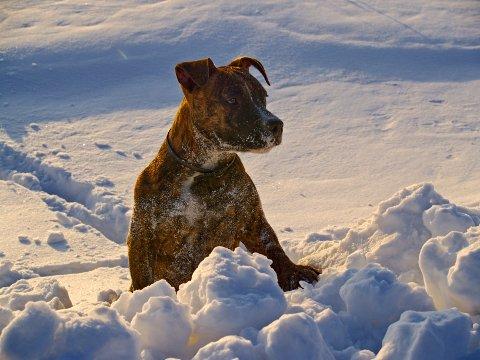 REDD: Studier viser at rundt halvparten av alle hunder sliter på grunn av høye lyder på nyttårsaften. Det tar Bauhaus i Sverige hensyn til, og slutter nå å selge fyrverkeri. I Norge skal kjeden forstette salget.