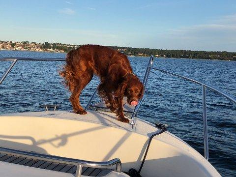 BLE SYK OG DØDE: Hunden Bianca døde sist fredag - 24 timer etter at eieren oppdaget at noe var galt.