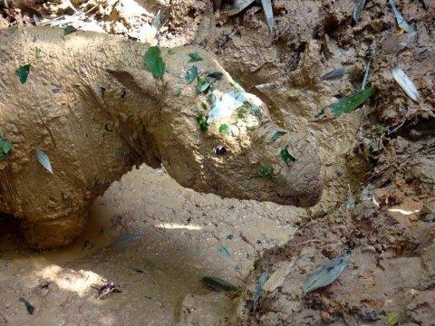 Verdens siste sumatraneshorn døde lørdag.