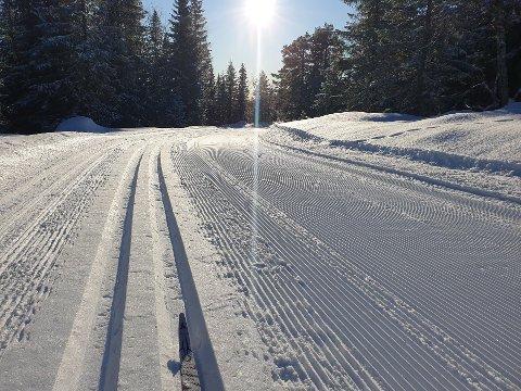 SILKEFØRE: Det er trikkespor i skiløypene ved Ringkollen i Ringerike kommune, som er et av stedene hvor det nå er skiføre på Østlandet. Bildet ble tatt tirsdag i strålende sol.