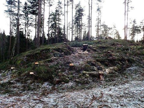 STOVNER: Bymiljøetatens trefelling på Stovner møter ikke mye begeistring hos naturvenner.